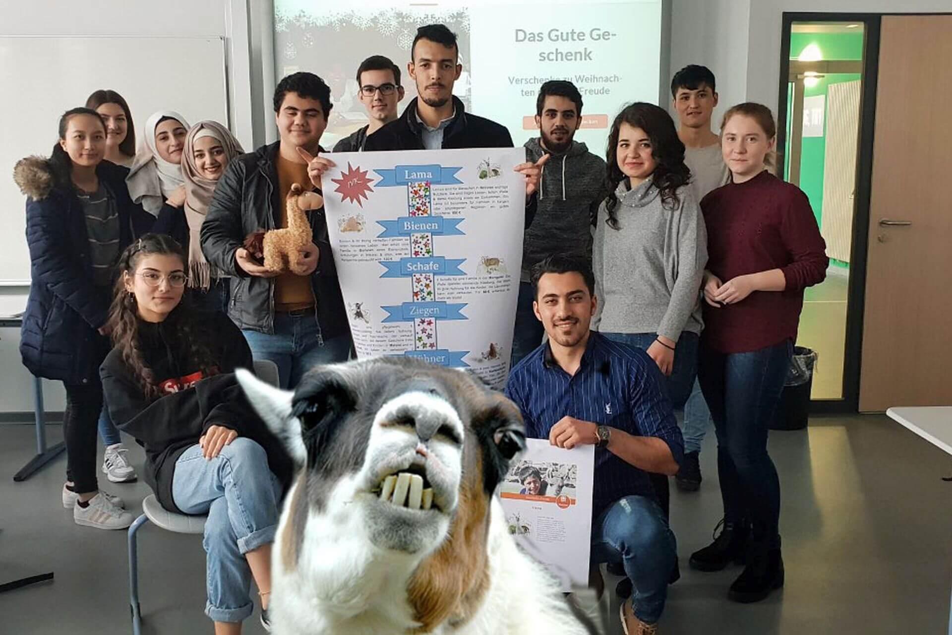 Spenden Für Ein Lama